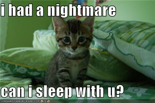 Cats kitten lolcats lolkittehs nightmare - 688576256