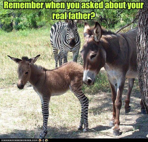 zebra,asked,real,answer,donkey,stripes,Father