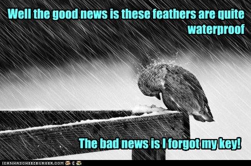 wet,good news,birds,raining,stuck,bad news,feathers,key,waterproof,forgot