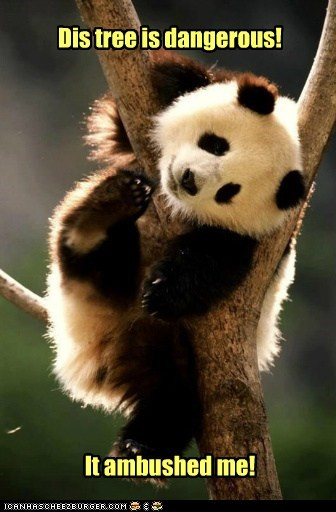 tangled,panda,ambush,tree,dangerous