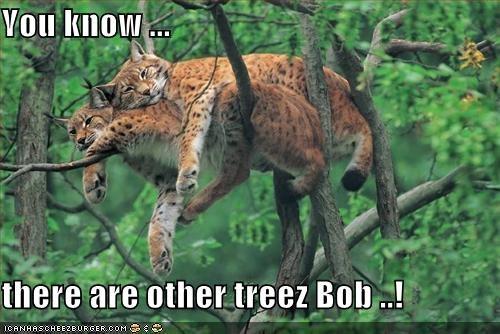 lolcats snuggle tree - 688784128