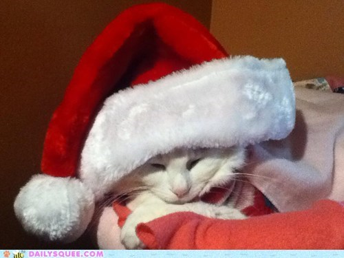 christmas reader squee pets Cats squee santa hat holidays - 6888222464