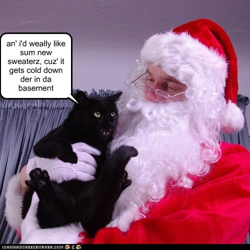 basement cat,christmas,captions,sweater,santa,Cats