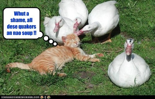 pun geese captions ducks soup Cats - 6888530176