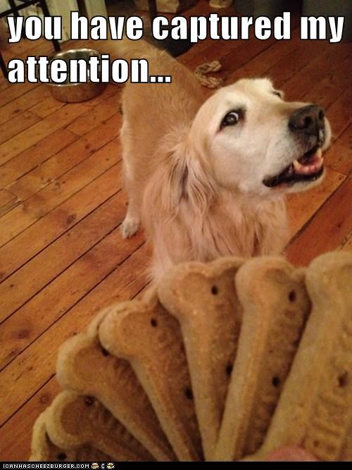 dogs treats attention dog bones intrigued golden retriever
