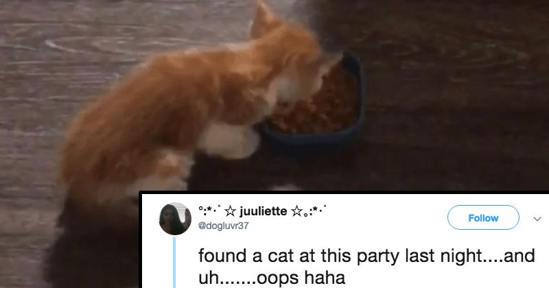 drinking snapchat ridiculous partying Cats animals - 6889477