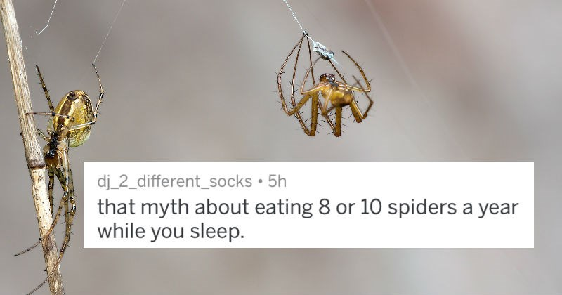 spiders quit your bullshit insects ignorance lies askreddit ridiculous - 6889989