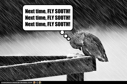 flying south,birds,cold,mistake,rain