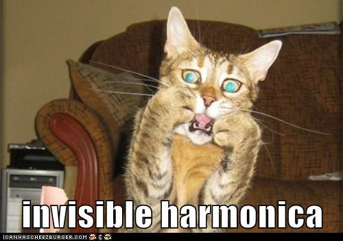 Music,captions,invisible,Cats,harmonica