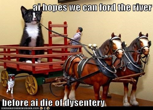 ford,river,pioneer,captions,america,oregon trail,Cats,dysentery