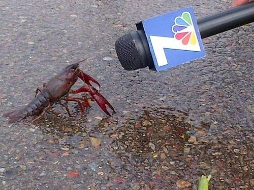lobster,fiscal cliff,tv interview,interview