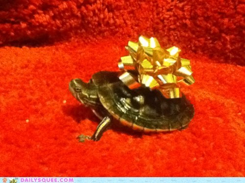 christmas gifts reader squee pets turtle squee ribbon