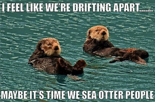 captions,puns,otters,drifting apart,dating