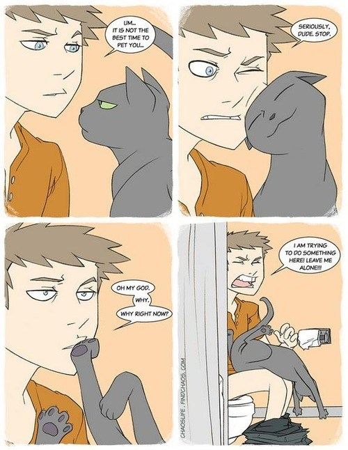 bathrooms illustrations annoying inappropriate comics Cats toilets - 6890966272