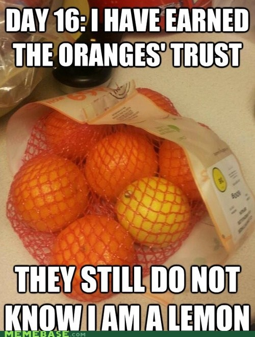 they still don't know,lemons,oranges,fruit
