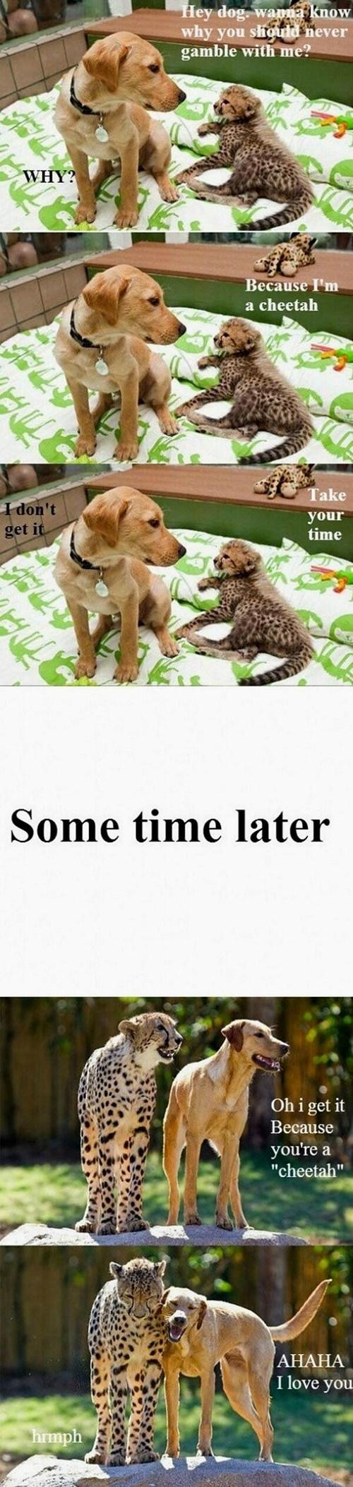 i-dont-get-it dogs Interspecies Love idgi puns cheetahs cheating slow stupid - 6890988800