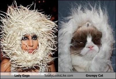 TLL lady gaga Grumpy Cat tard funny look alikes musicians - 6891109376