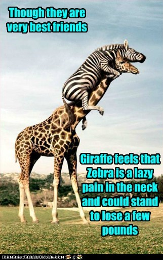 Though they are very best friends Giraffe feels that Zebra is a lazy pain in the neck and could stand to lose a few pounds