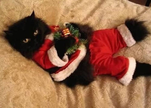 basement cat,christmas,santa,Cats,funny,holidays