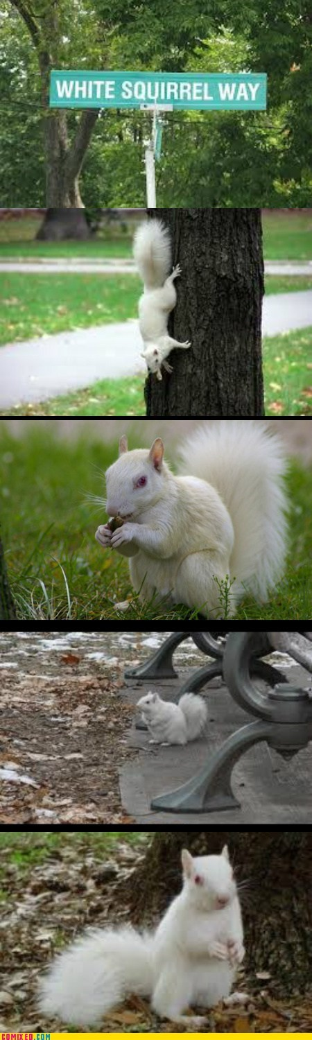 street,albino,squirrel,white,squee