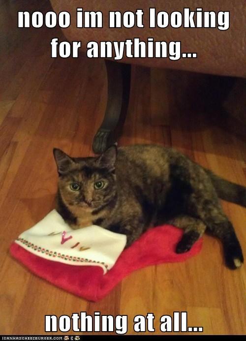 christmas stocking captions suspicious Cats - 6891385088