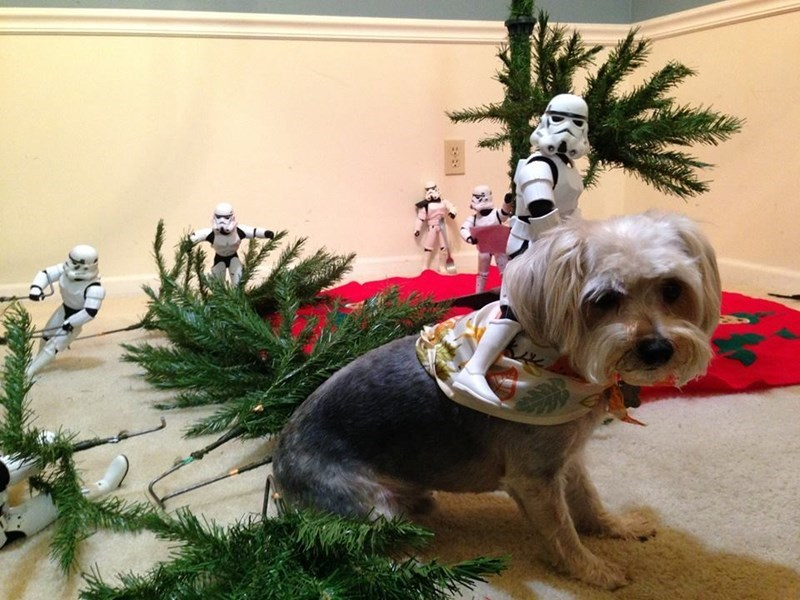An Army of Stormtroopers Became Santa's Little Helpers While Putting Up a Christmas Treet