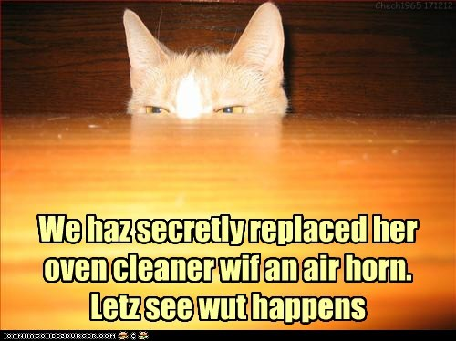 We haz secretly replaced her oven cleaner wif an air horn. Letz see wut happens Chech1965 171212