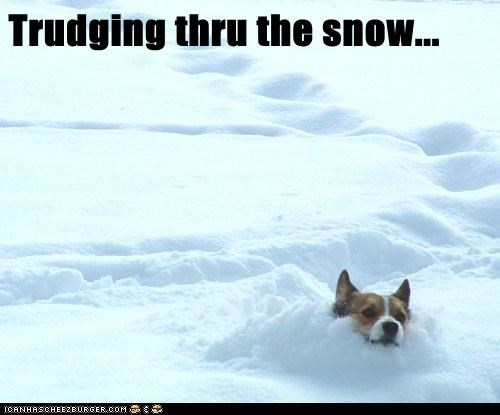 Trudging thru the snow...