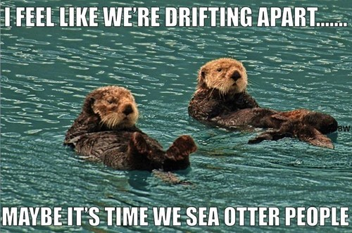 sea otters,relationship,people,pun,otters,drifting apart,breaking up