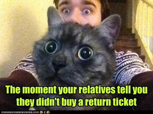 relatives,flight,captions,family,return,Cats