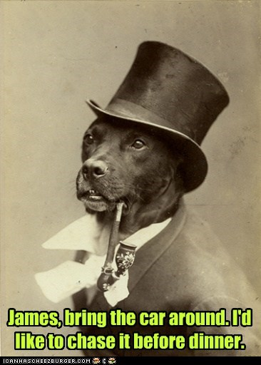 dogs cars old money dog - 6892344320