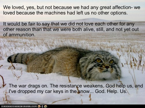 war,cold,captions,ammunition,love,Cats