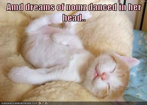 christmas dream sugarplums captions nom Cats