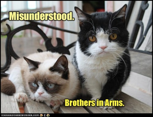 tardar sauce,siblings,captions,misunderstood,Grumpy Cat,Cats,brothers