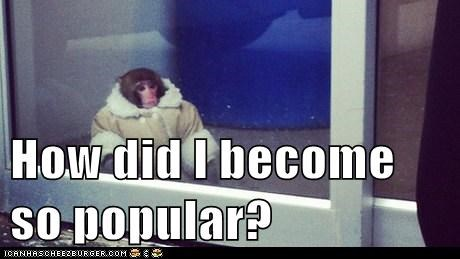 ikea monkey,existential questions,popularity