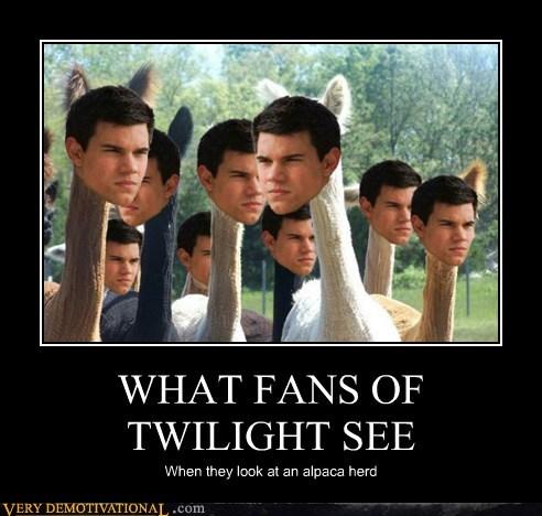 alpaca twilight fans taylor lautner - 6893132288