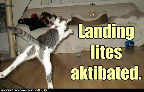 lights landing captions Cats