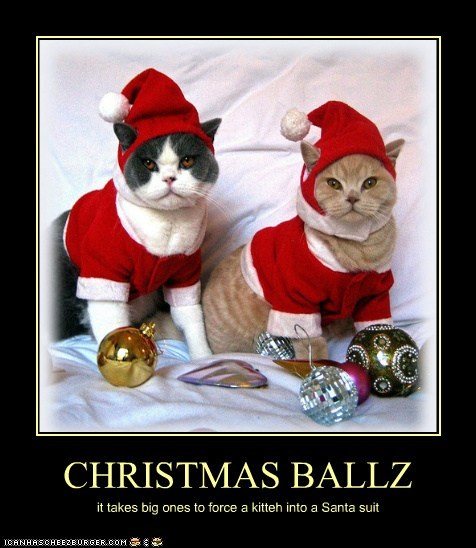 CHRISTMAS BALLZ it takes big ones to force a kitteh into a Santa suit