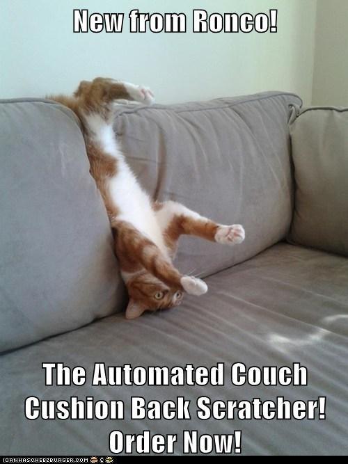 scratch couch captions backscratch back Cats - 6893383936