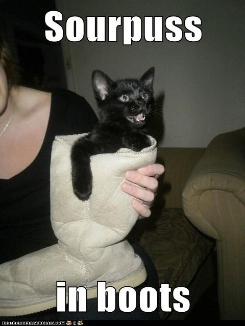 shoes,captions,uggs,Puss in Boots,sourpuss,Cats