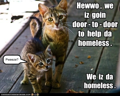 adopt homeless captions forever home Cats - 6893476096