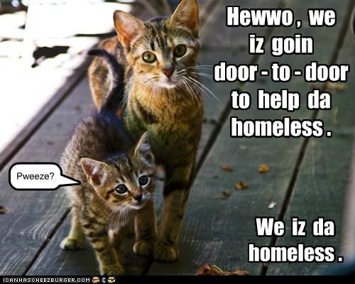 adopt homeless captions forever home Cats - 6893476096