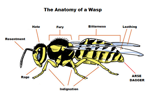 anatomy,wasp,horrible