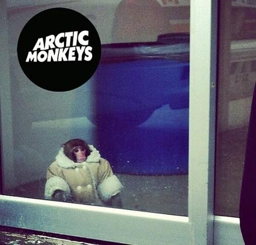 arctic monkeys Music monkeys ikea monkey puns bands - 6893780480