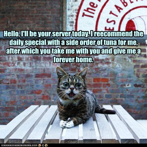 adopt,lil bub,tuna,captions,restaurant,forever home,Cats