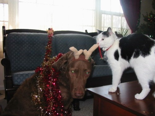christmas,dogs,garland,Interspecies Love,antlers,costume,goggies r owr friends,Cats
