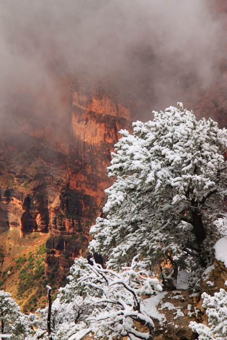 snow,landscape,grand canyon,tree,winter,fall