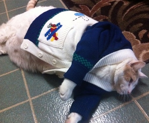 cat,sweater