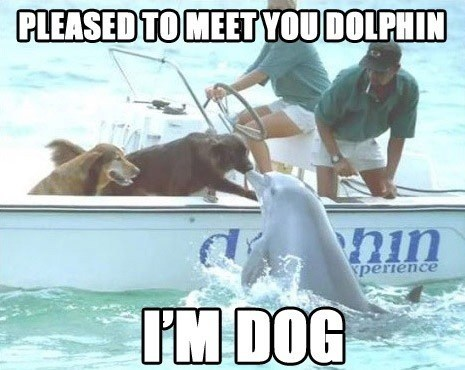 hi dogs handshake boat dolphis pleased to meet you - 6894586368