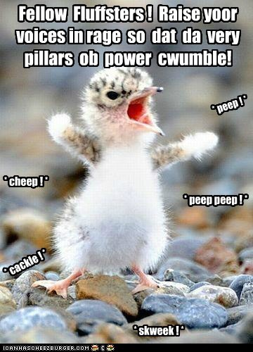 Fellow Fluffsters ! Raise yoor voices in rage so dat da very pillars ob power cwumble! * peep ! * * peep peep ! * * cheep ! * * cackle ! * * skweek ! *